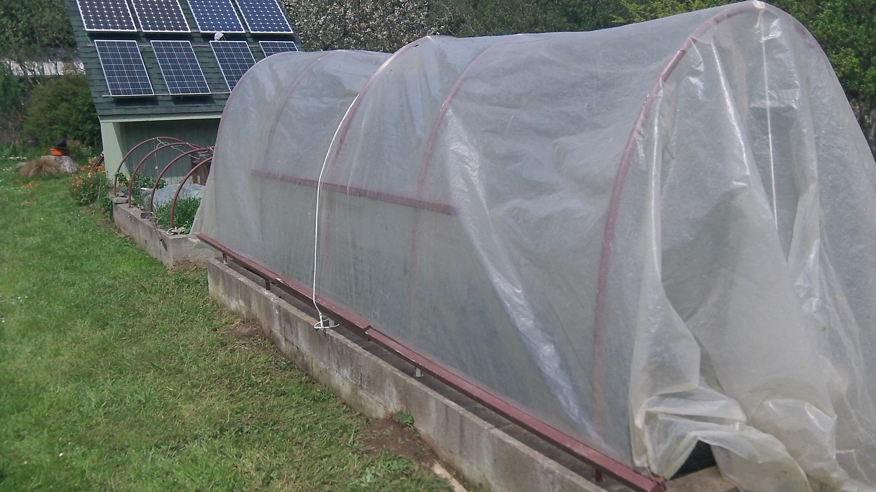 Tent is closed protecting the plants from the cool night air. Since we like to eat tomatoes in the winter we plant about 60 plants. & Got Rain? Get Tomatoes (anyway) | Adventures in Natural Beekeeping