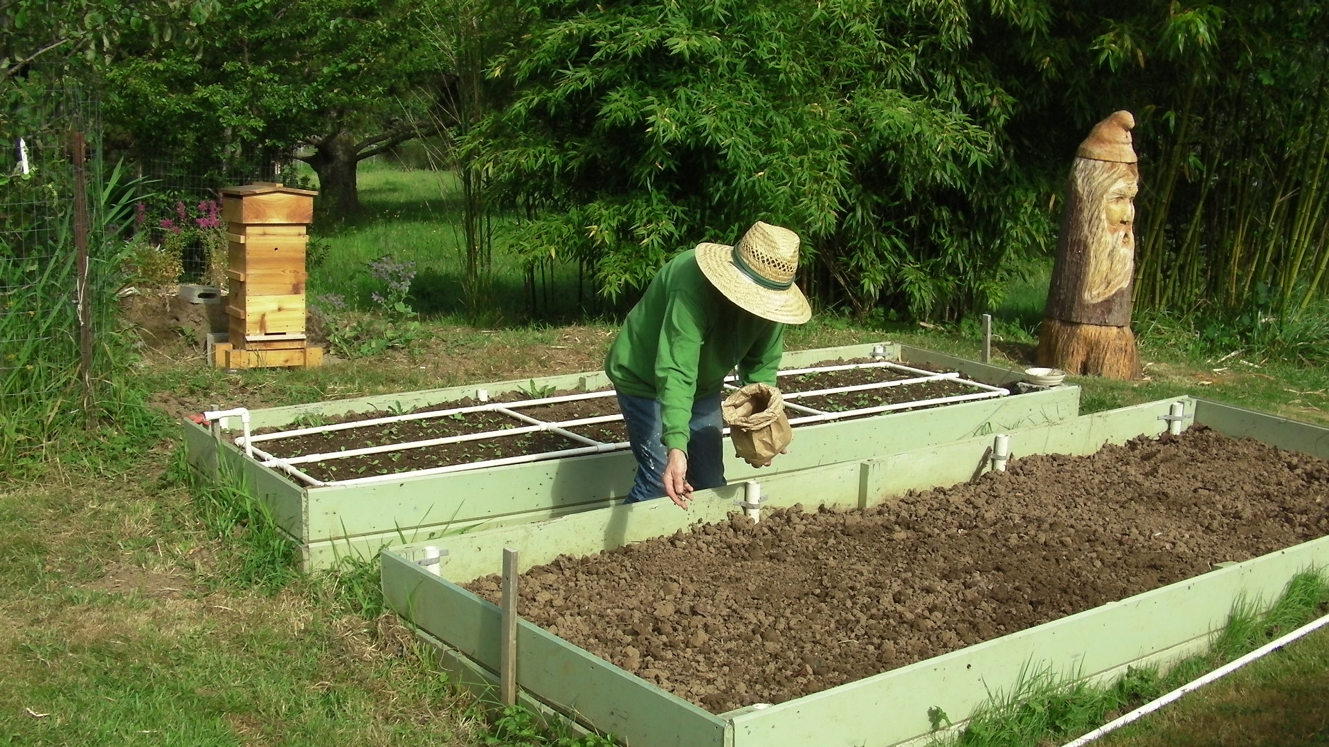 Plant Buckwheat For The Bees Adventures In Natural