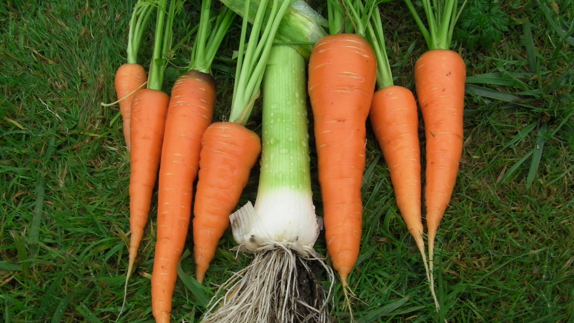 Image result for carrots and leeks