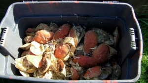 I get as much crab shell as I want from Tony's Crab Shack in town.  It's only about 4 miles (6.4 km) round trip by bicycle, my transportation of choice.