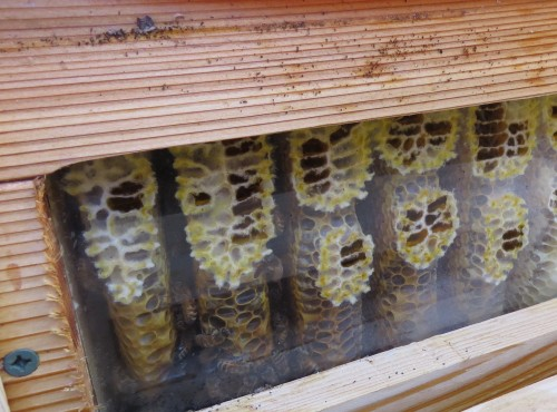 When it's cold the bees hang out in the lower left of hive.