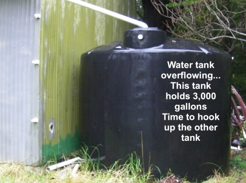 Only 5 days of rainfall, this tank is full.  I've got to hook up the second tank.