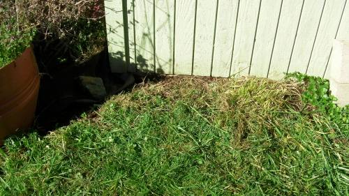 Grass trimmed under nests
