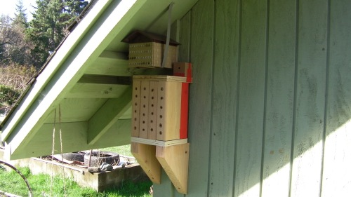 Mason Bee Nests in place