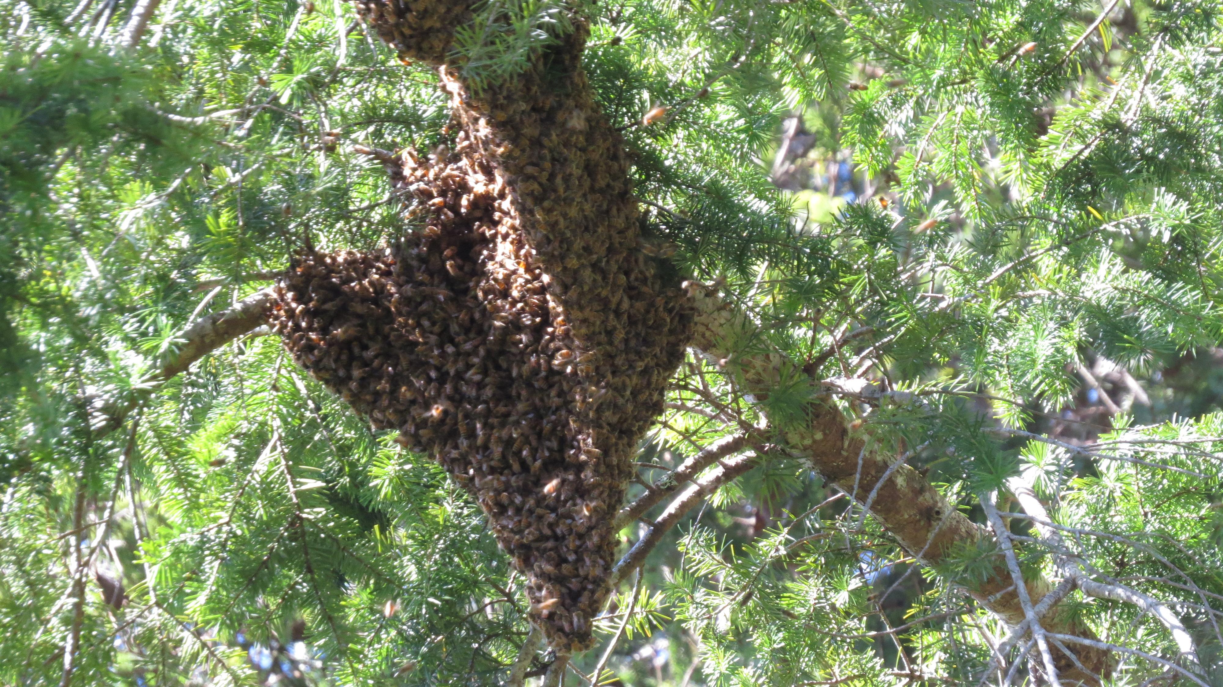 Feeding Sugar Adventures In Natural Beekeeping