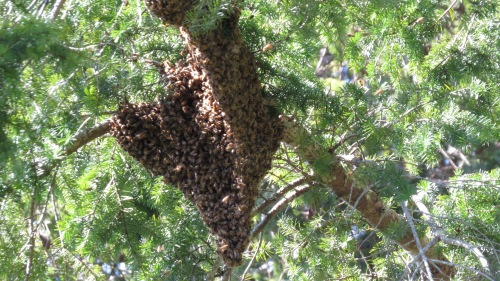 This is what we were waiting for...Bee Beard's Prime Swarm, but it was waaay out of reach
