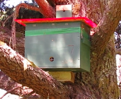 Tree hive, and how it got here