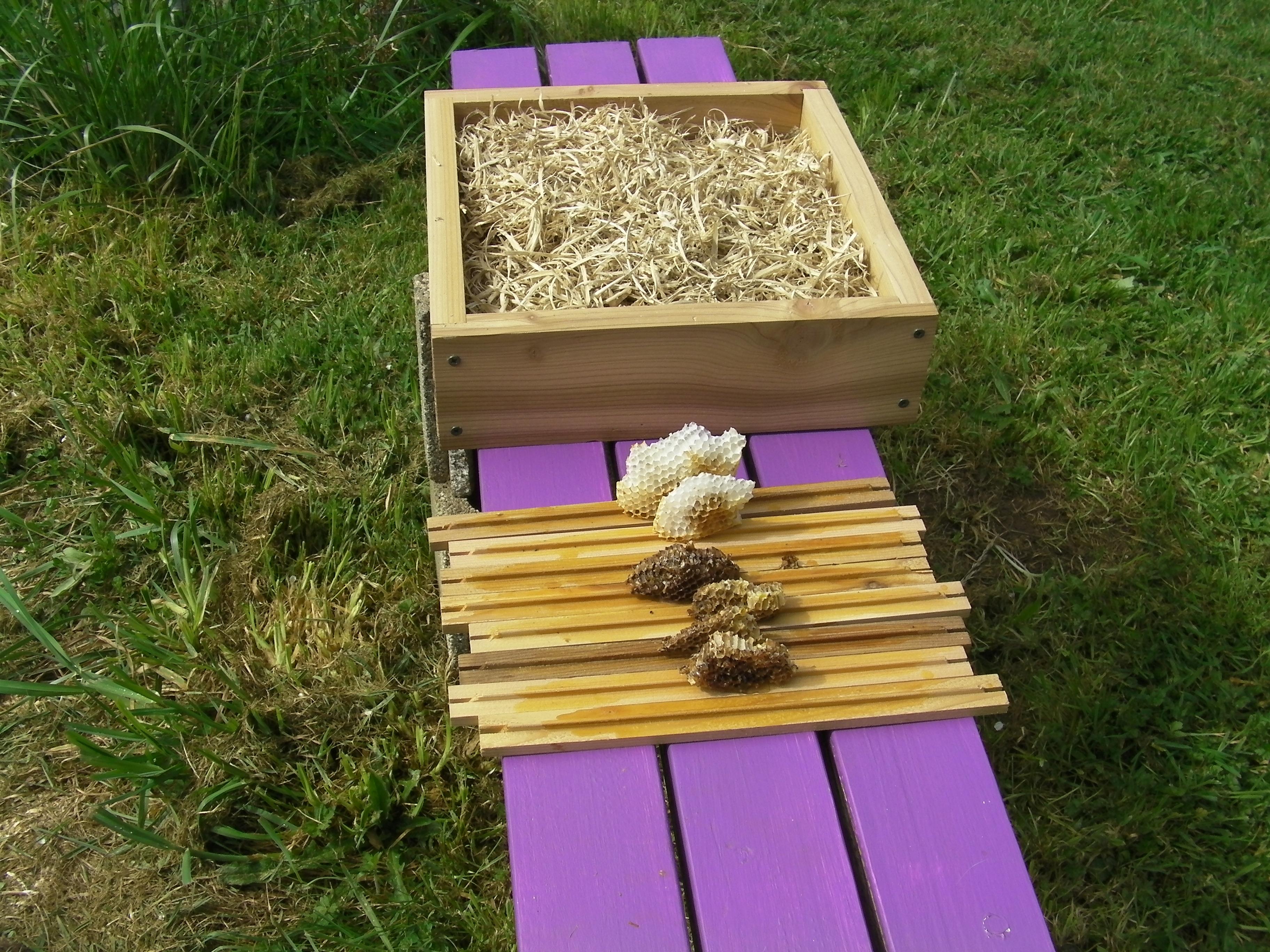 Bee Beard Log Hive Swarm #2 | Adventures in Natural Beekeeping
