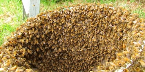 A Bucket of Bees