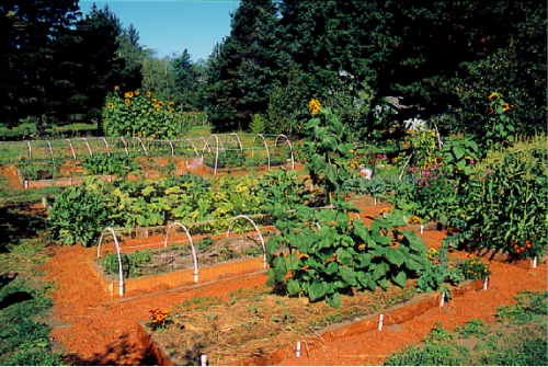 This is how the garden looked in August 1998.  All those beautiful raised beds are rotting into the ground after 15 years and need to be replaced.