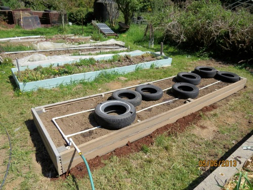 Soil leveled, drip water grid laid out, tires centered over drip holes in pvc.