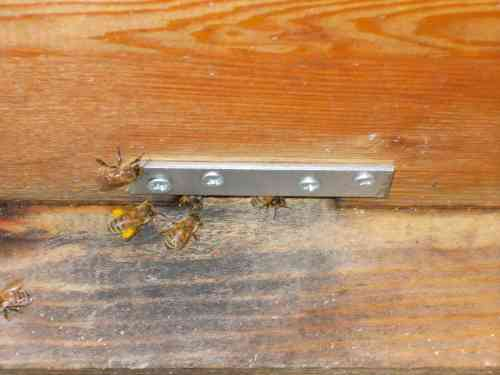 "February 10, 2014...Vernon says, ""After a few days of rain the foragers are again out in force, and they are collecting more golden-yellow pollen than ever.  This winter has been so warm and dry I'm not sure the Perone hive is getting an adequate test."""