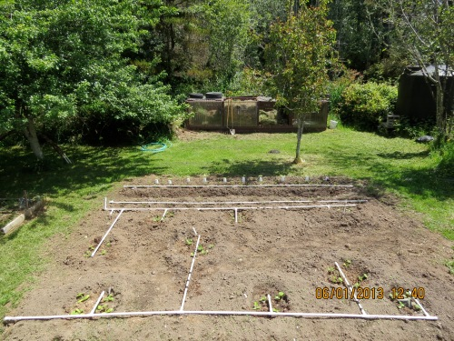 Squash and corn area 6-1-13, with water grid.