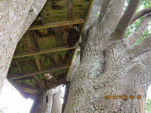 A hive under tree house on steep slope
