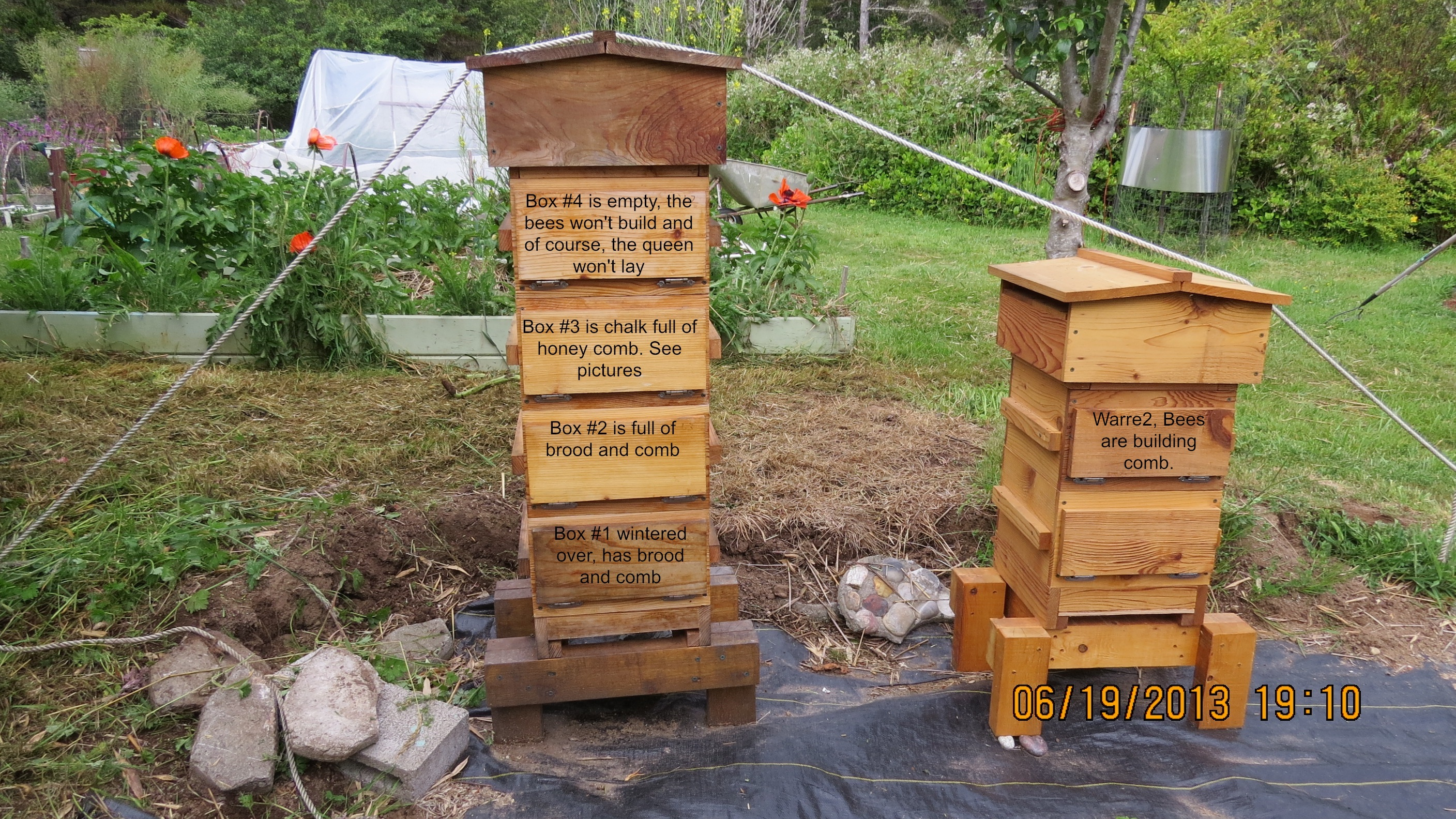 Warre Hive | Adventures in Natural Beekeeping | Page 2