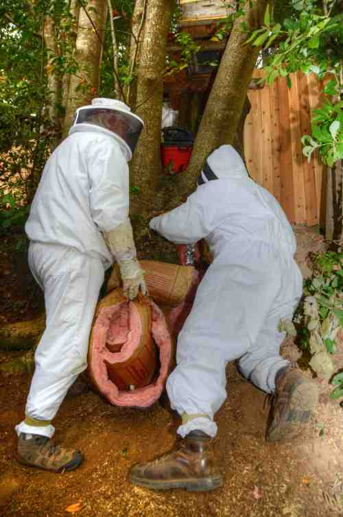 Stuffing insulation into the tree cavity