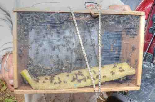 Bee-vacuumed bees