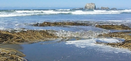Piles of seaweed get pummeled by the incoming tide.