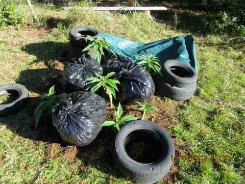 11-24-13...I've had to take drastic action for the cold weather.  Bags of leaves hold up the tarp, tires hold it down.