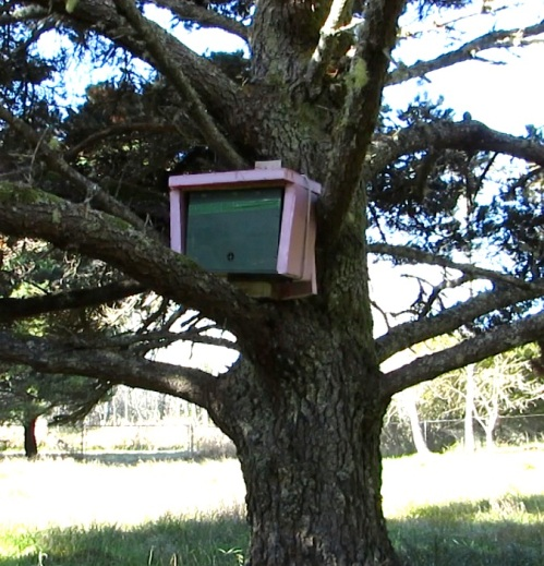 December 27...Even this little hive was flying today.  The pink insulation is meant to cut the cold wind, but it still lets the hive breathe through the quilt box on top.