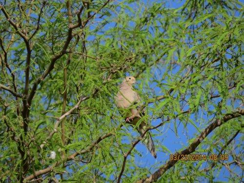 A desert bird.  My knowledge of birds is completely underwhelming.