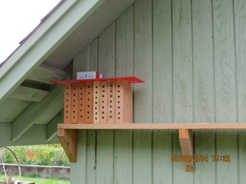 March 6, 2014...first set of Mason bee blocks set up on new shelf.