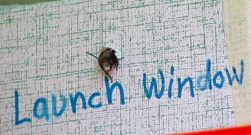 March 30, 2014...We have lift-off.  After 24 days of anxious waiting, we see a bee emerge.
