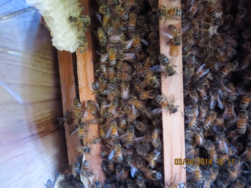 March 24, 2014...bees moved in right away.