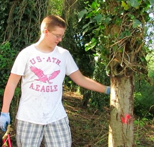 Tristan explains ivy removal
