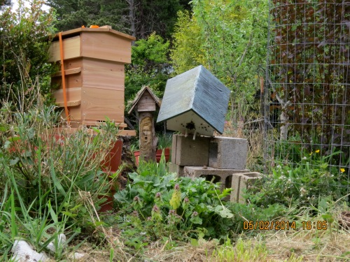 I placed the birdhouse next to the newly assembled and baited  Warre hive.   I was hoping the bees would recognize a 4 star lodge with ample room to grow.