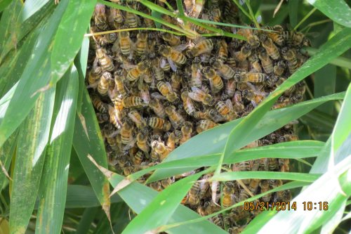 A closer look reveals that while small, this swarm might be big enough to make it.