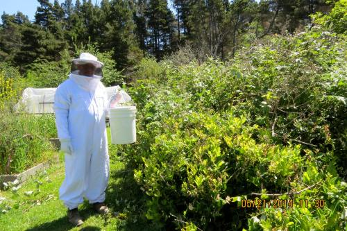 Bob was patient when I asked him to pose with the blackberry swarm in bucket...hey, I've got to bid them 'goodbye.'