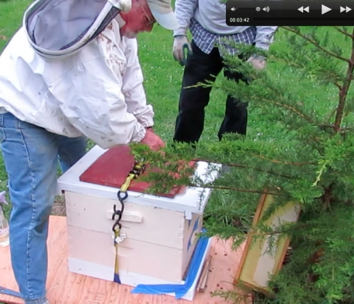 Hal cinches the belt so we don't have to worry about the hive sliding open and bees flying around our heads.