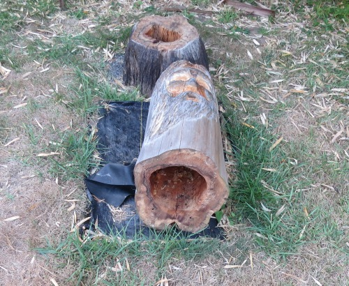 Bee Beard log hive, down for the count.  I had cleaned it out.