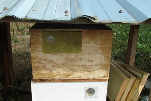 After removing some frames, the screened inner box is placed over Jeff's (bee-less) hive.