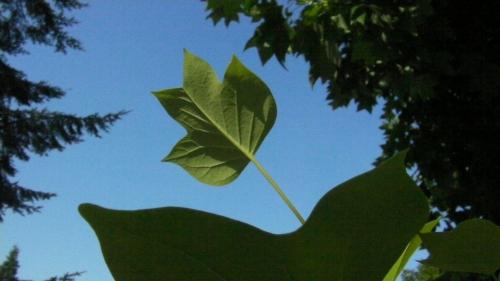 6 seed against sky