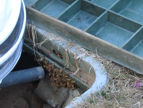Getting the bees removed from behind the below ground valve box would have been very difficult without the use of Bob's Bee Vac.
