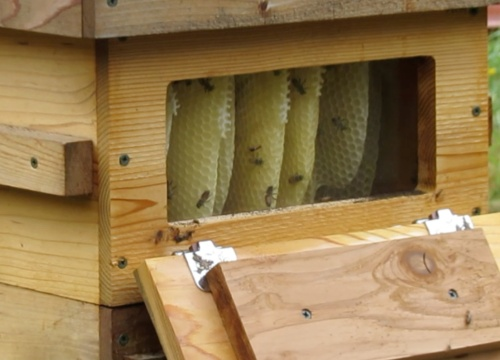 July 14...Even fewer bees in July.  That means (to me) only one thing.  This hive is going nowhere.  It's all over except for the robbing.