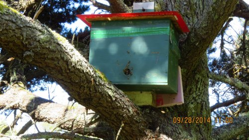 This hive started out as an emergency backup nuc hive on April 18, 2013.  It was with the fourth or fifth swarm to come out of my log hive.  I fitted it with bars that would fit my Warre hive.