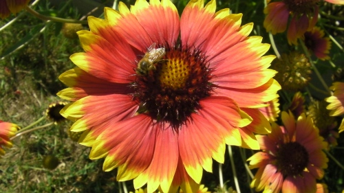 If you want to grow some very colorful flowers that will bloom in September, try these Arizona Suns.
