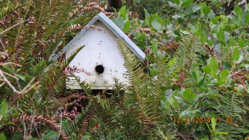 A closer look at the birdhouse bees shows no bee activity.