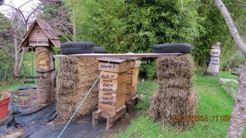 Bee-atrice log hive is on the left.  The inner tube is a draft reducer, not what it looks like, so no snide remarks!