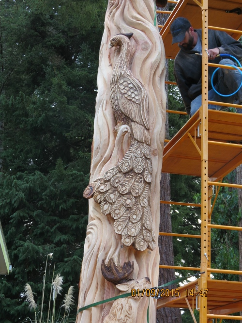 Peacock carving