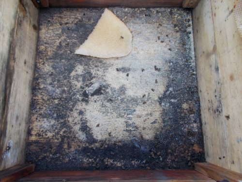 A few dead bees remain, but the most concerning thing about the floor is the black mold (or whatever it is).
