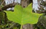 Close up of leaf, 4-8-14,bigger