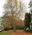 December…No leaf blower for us!!copy