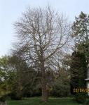 My Tree tofollow