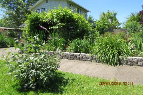 Carmella's corner lot garden.