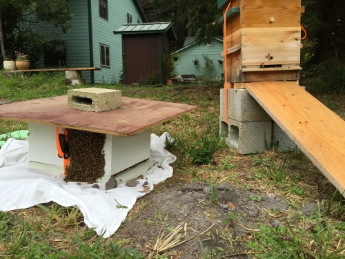 ...all grouped up on the SIDE of the hive.
