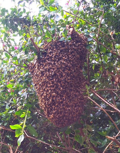 Another look at the swarm after removing some branches.